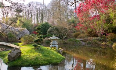 Project visual Parc botanique de Haute Bretagne, un patrimoine botanique en danger