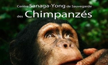 Visueel van project SANAGA-YONG : Centre de Sauvegarde des Chimpanzés
