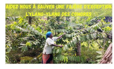 Visuel du projet AIDEZ NOUS À SAUVER UNE FILIÈRE D'EXCEPTION  ! Ylang-Ylang Comores