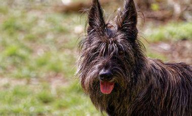 Visueel van project Un nouveau service : éducateur canin à domicile