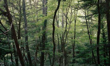 Visueel van project Out of sight, by Delphine Parodi & Yoko Tawada