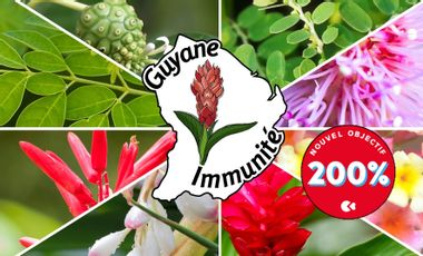 Visuel du projet Guyane Immunité
