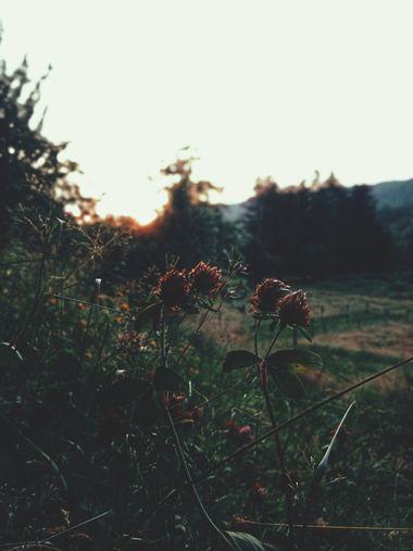 Visuel du projet Journal de deuil