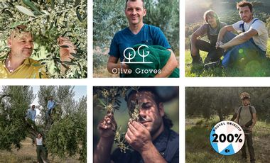 Visueel van project Olive Groves
