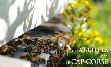 Visuel du projet Des abeilles dans le Cap Corse