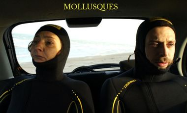 Visueel van project Mollusques