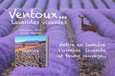 Visuel du projet Livre photos Ventoux... Lavandes vivantes