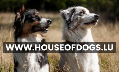 Project visual House of Dogs