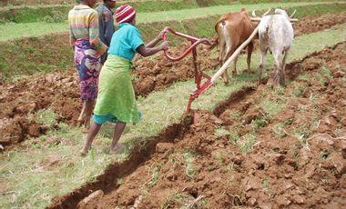 Visueel van project Un terrain pour créer des emplois à Madagascar