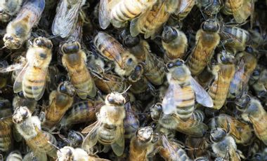 Visuel du projet SOS Abeilles 🐝 en danger - Le rucher de Christine
