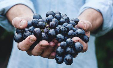 Visuel du projet Enomotion Wine Club