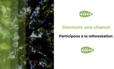 Visueel van project Le  stream en soutien à la reforestation