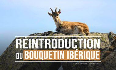 Project visual Réintroduction du bouquetin ibérique