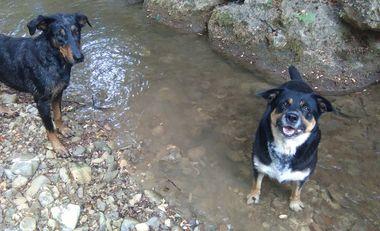 Visueel van project Projet de lieu d'éducation canine en méthode positive