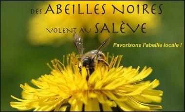 Visueel van project Des abeilles noires volent au Salève