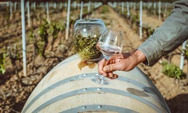 Visuel du projet Joselita by KAANAÏ: First French CBD Rosé Wine