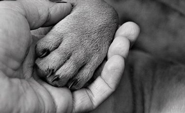 Visuel du projet Création d'une association de médiation par l'animal