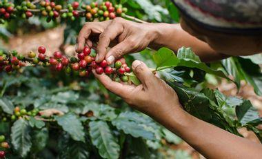 Visuel du projet PROMOUVOIR LES CAFÉICULTEURS INDÉPENDANTS DE COLOMBIE EN PÉRIL