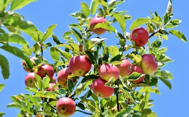 Visueel van project Creation of an Apple Orchard