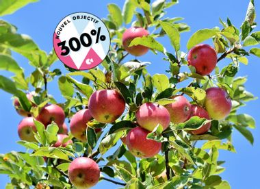 Visuel du projet Création d'un Verger de Pommes