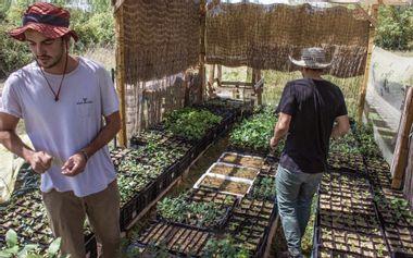 Visuel du projet PETIT CLIMAX, pépinière locale pour forêts méditerranéennes