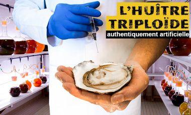 Project visual L'huître triploïde, authentiquement artificielle
