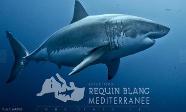 Visuel du projet Grand Requin Blanc de Méditerranée