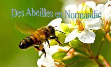 Project visual Des Abeilles en Normandie
