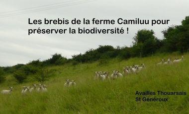 Visueel van project Les brebis de la ferme Camiluu pour préserver la biodiversité!