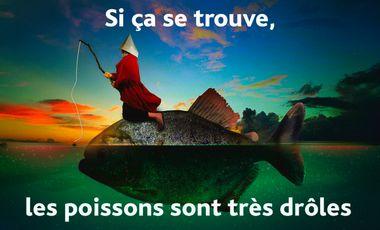 Project visual Si ça se trouve, les poissons sont très drôles
