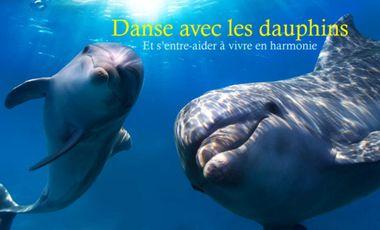 Project visual Rencontres avec les Dauphins sauvages
