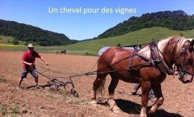 Visuel du projet un cheval pour des vignes