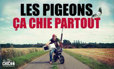 Project visual Les pigeons, ça chie partout