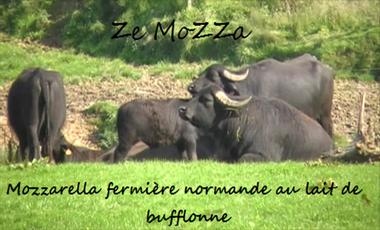 Visuel du projet Ze MoZZA...La Mozzarella Fermière Normande au Lait de Bufflonne...