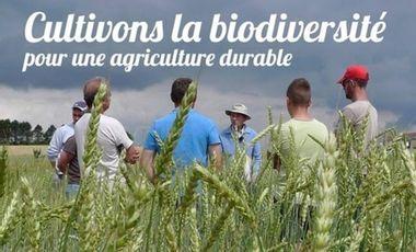 Visueel van project CULTIVONS LA BIODIVERSITÉ POUR UNE AGRICULTURE DURABLE ET UNE ALIMENTATION SAINE
