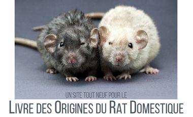 Visueel van project Livre des Origines du Rat Domestique