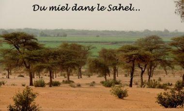 Visuel du projet Du miel dans le Sahel