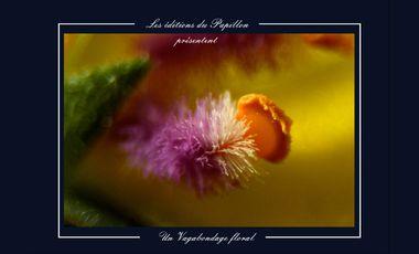Visuel du projet Vagabondage floral
