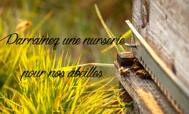 Visuel du projet Parrainez une nurserie pour nos abeilles