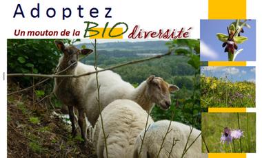 Visuel du projet Les moutons de la biodiversité