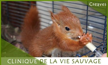 Visueel van project Creaves - Clinique de la vie sauvage