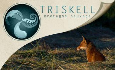 Project visual Triskell - Bretagne Sauvage