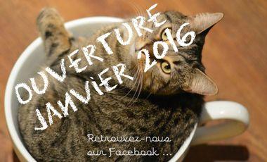 Visueel van project Le café à chats d'Avignon, solidaire avec la SPA