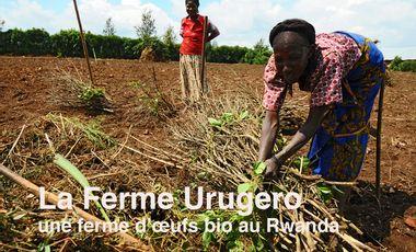Visuel du projet La Ferme Urugero au Rwanda