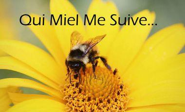Project visual Qui miel me suive
