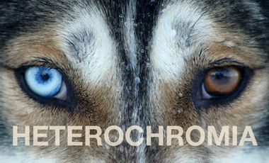Visueel van project HETEROCHROMIA