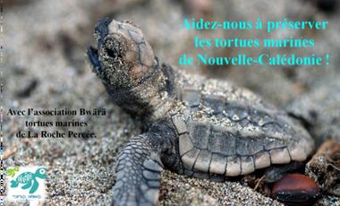 Visueel van project Préservons les tortues marines de Nouvelle Calédonie !