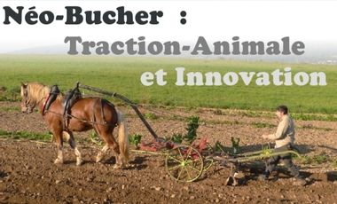 Project visual Néo-Bucher : Traction animale et innovation