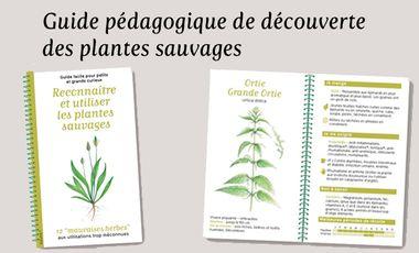 Visuel du projet Guide pédagogique de découverte des plantes sauvages
