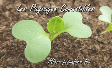 Visuel du projet Les Paysages Comestibles - Micro-pépinière bio